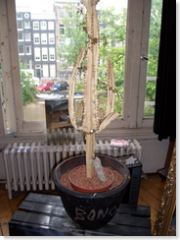 De veelbesproken cactus (gekregen van Bono)